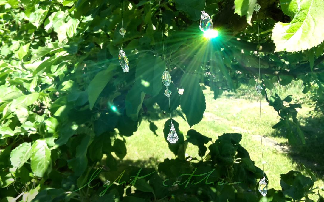 łapacz światła w liściach jabłoni